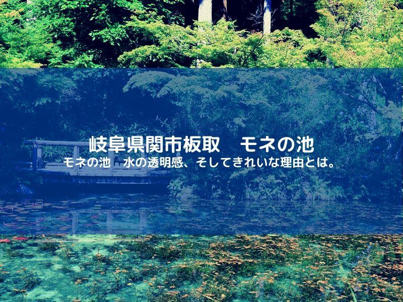 モネの池 きれいな理由