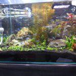 熱帯魚水槽 – キューバパールグラス