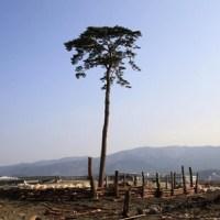 平成イソップ物語 15: 「津波とモグラ」の補足