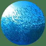 sustainable farming fish farms