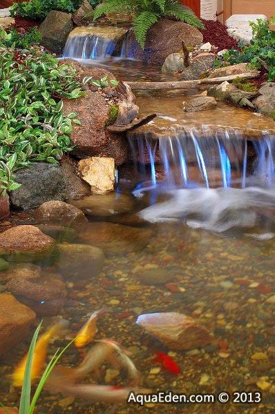 Indoor Water Garden Fish
