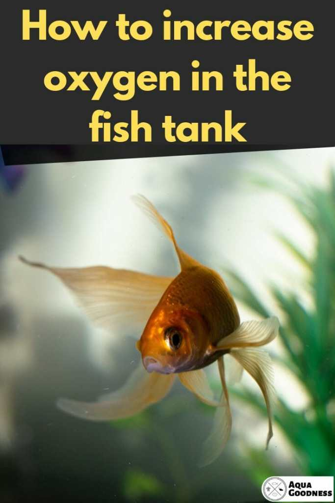 How to Increase Oxygen in the Fish Tank image