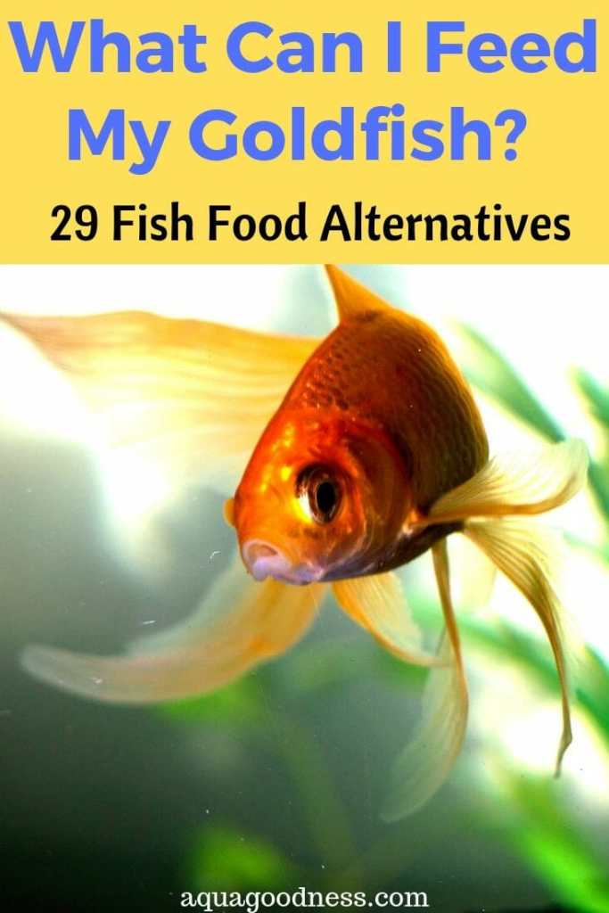 What Can I Feed My Goldfish? (29 Fish Food Alternatives) image