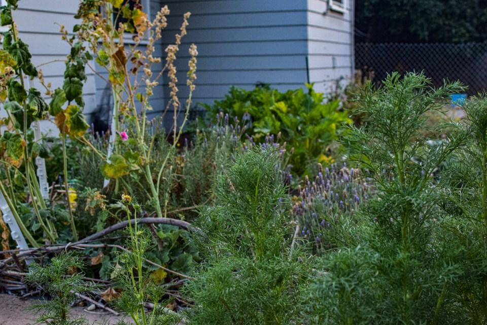 a simple farmhouse garden