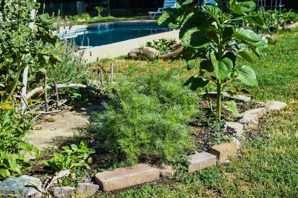 garden beds filled with plants for garden inspiration
