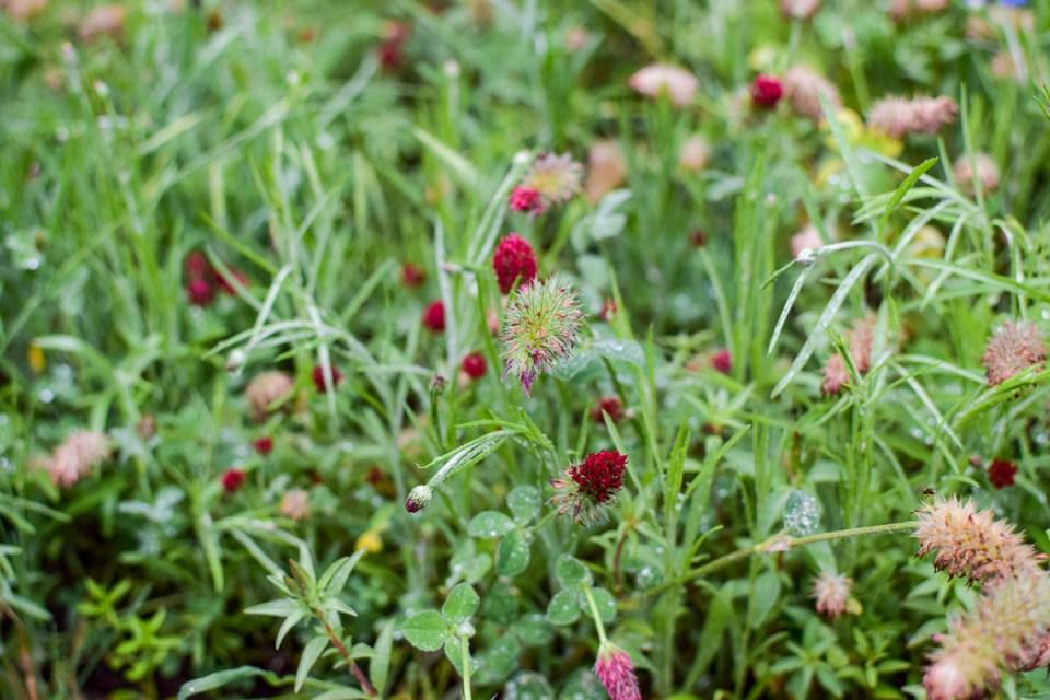 flowers in a wild garden