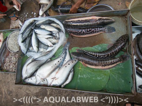Mixture of the fish on local market