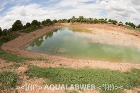pond filled with water after its reconstruction. Fish farm near Phnom Penh, Cambodia