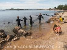 Exploration of the life in coastal zone.