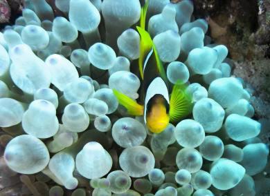 clown-fish-1268677