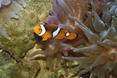 clown-fish-931121