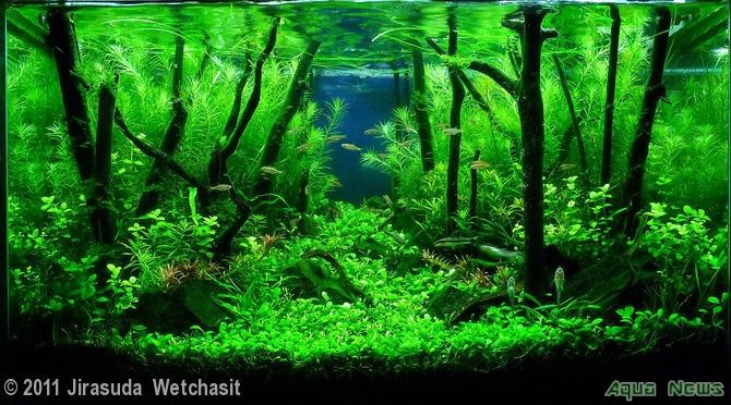 Aquatic Tank Plants