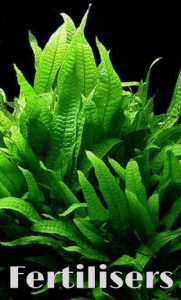 aquarium plants fertilisers aquaplantscare.uk
