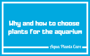 Planted fish tank Aqua Plants Care