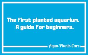 Planted Tank start