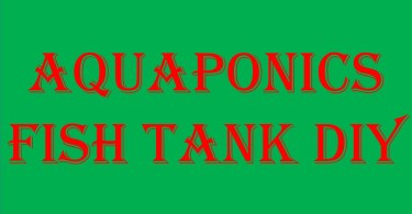 aquaponics fish tank diy