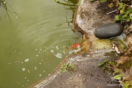 Emejing Bassin De Jardin Algues Vertes Contemporary - Design Trends ...