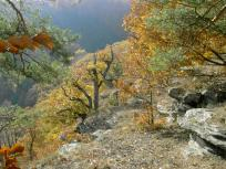 weinviertel, nationalpark, thayatal, thaya, schwalbenfelsen