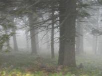 nebel, mist, fog, schneeberg, wald, bäume, forest, trees