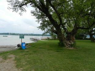 baum, ammersee, see, tree, lake