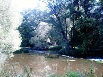 boote, fluss, river, thaya, hardegg, wald, forest
