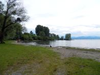 weide, willow, bodensee, ufer, banks
