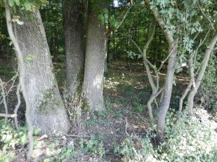 landschaft, landscape, paysage, trees, bäume, arbres, wald, weg, path, forest, bois, chemin, sommer, summer, été