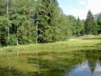 teich, pond, étang, lilien, schwertlilien, lily, lilies lis, iris, yellow, flag, flambes,