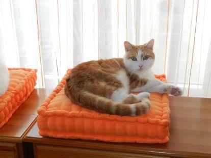 2014-03-23 - Katzen 1