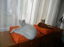 2014-03-23 - Katzen 2