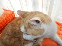 2014-03-23 - Katzen 5