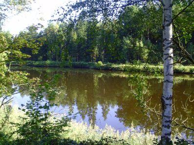 teich, pond, étang, birke, birch tree, birch, bouleau, waldviertel, sommer, summer, été,