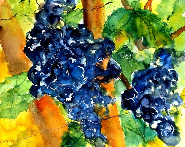 aquarell, watercolor, aquarelle, hügel, hill, colline, weinberg, vineyard, vignoble, weingarten, vineyard, vigne, trauben, grapes, grappe, raisin, herbst, fall, autumn, automne,