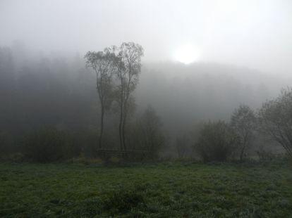 waldviertel, bäume, trees, arbres, albero, árbol, baumstamm, trunk, tree trunk, tronc, tronco, nebel, fog, mist, brouillard, brume, antinebbia, fumogeno, niebla, bruma,