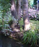 teich, pond, étang, laghetto, stagno, bäume, trees, arbres, albero, árbol, garten, garden, jardin, giardino, giverny
