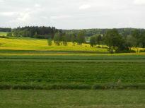 gelb, yellow, jaune, giallo, amarillo, feld, felder, field, fields, champ, champs, campo, raps, canola, colza, waldviertel, rapsfelder