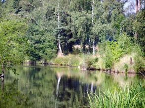 fischteich, fishpond, vivier, peschiera, vivaio, cetárea, cetaria, estanque, teich, pond, étang, laghetto, stagno, wald, forest, bois, bosco, foresta, selva, kleinfinnland,