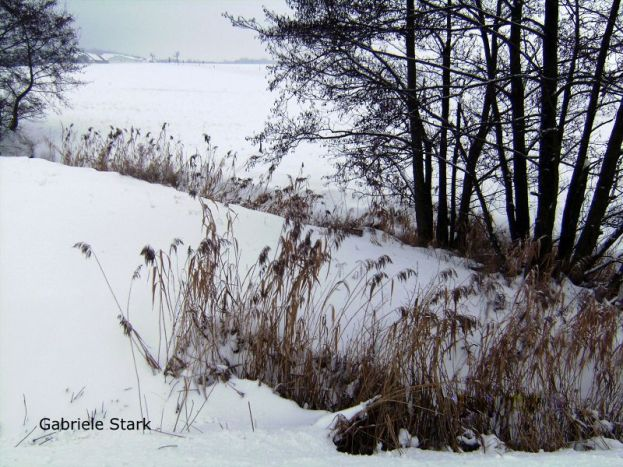 winter, hiver, inverno, invierno, bäume, trees, arbres, albero, árbol, schnee, snow, neige, neve, nieve, feld, felder, field, fields, champ, champs, campo, see, lake, lac, lago