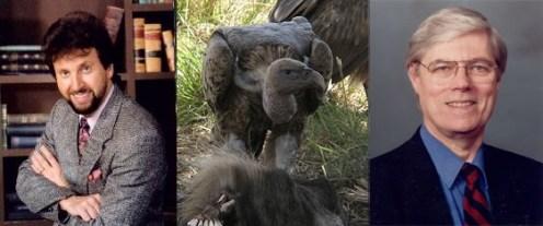 Ron Schmitt Vultures