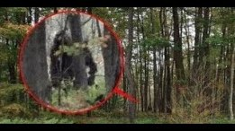 Bigfoot mqdefault