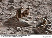 Moon Lizard Statues 11866497_898030736935589_7834443211199642204_n