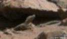 Moon lizard