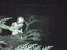 extraterrestrials shyalien