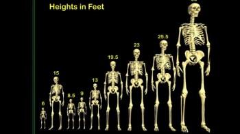 Giants Giant Chart maxresdefault
