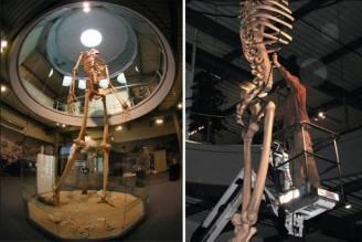 Giants equador-giant