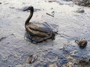 oil-spills-photohandler