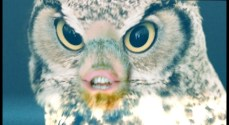 Owls Greys Aliens_first_look