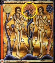 Trees of Life & Knowledge The Canturbury Psalter, 1147 AD,