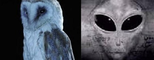 owls grey aliens connection the-fourth-kind-pic-4