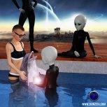 Dolphin Healing